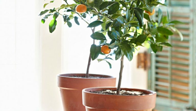 Tommy's Tangerine Tree – an Easter story
